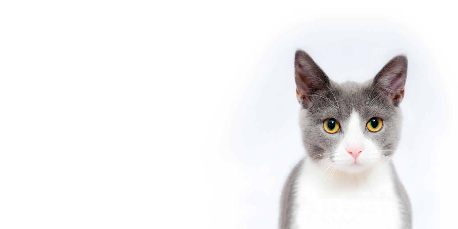 Clinique vétérinaire chat Paris 14 ème