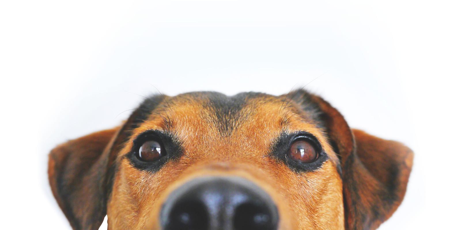 Chien spécialisée clinique vétérinaire à Paris 14 ème