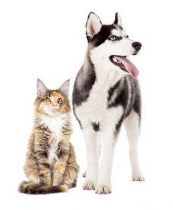 Clinique chien et chat Paris