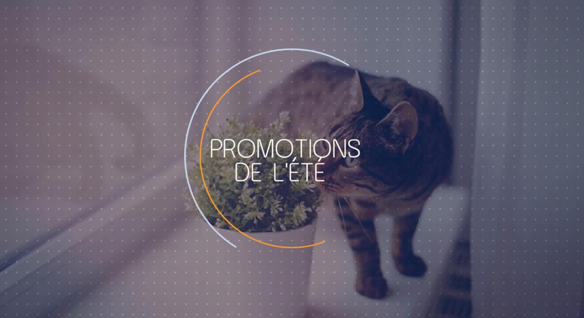Promotion alimentation chien chat